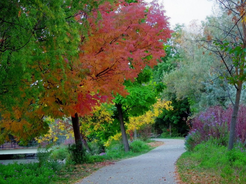 Greenbelt along Boise River dazzles in the fall